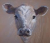 Spring calf