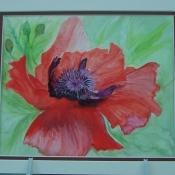Summer Bloom Poppy