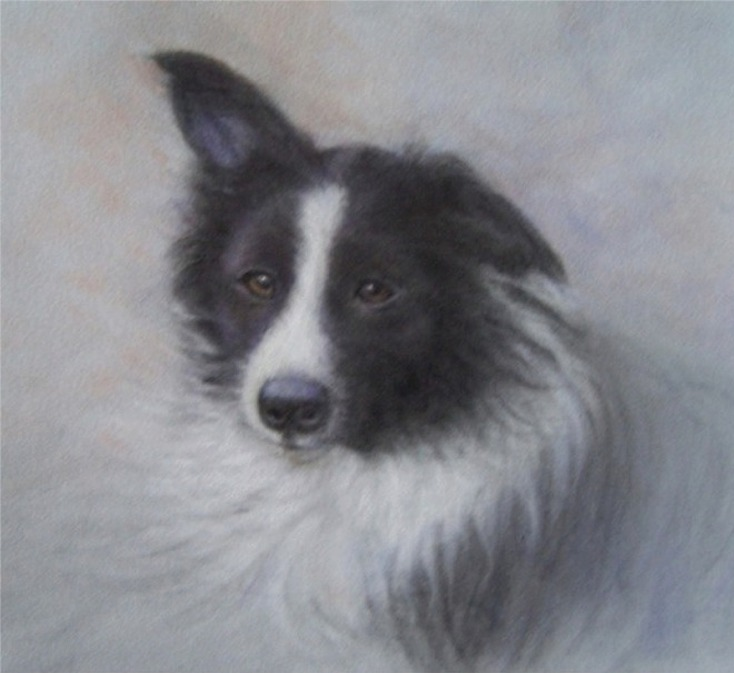 Little Collie